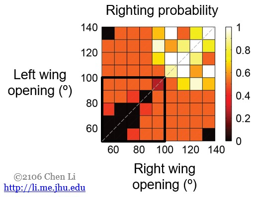 asymmetric-wing-opening-hypothesis-result