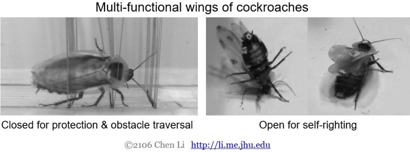 cockroach-wings-multi-functions