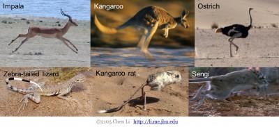 Cursorial Animals