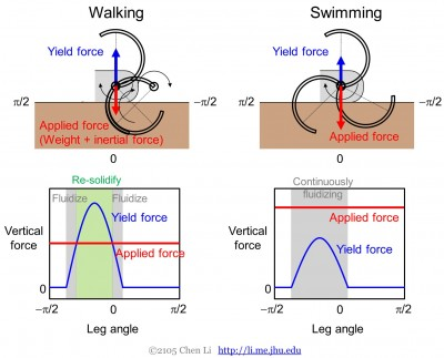 Walking vs. Swimming